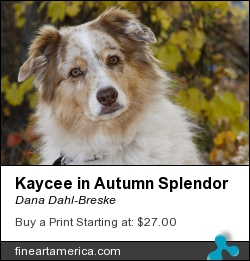 Kaycee In Autumn Splendor by Dana Dahl-Breske - Photograph