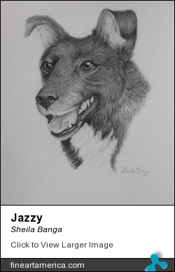 Jazzy by Sheila Banga - Drawing - Pencil