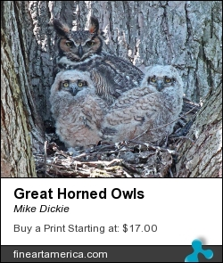 Great Horned Owls by Mike Dickie - Photograph