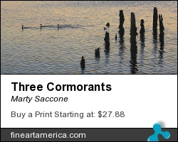 Three Cormorants by Marty Saccone - Photograph - Fine Photography