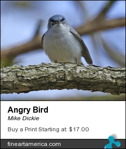 Angry Bird by Mike Dickie - Photograph