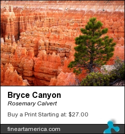 Bryce Canyon by Rosemary Calvert - Photograph - Photography