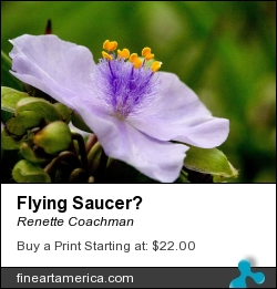 Flying Saucer? by Renette Coachman - Photograph - Digital Photograph