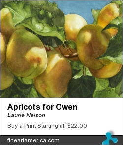 Apricots For Owen by Laurie Nelson - Painting - Watercolor