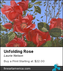 Unfolding Rose by Laurie Nelson - Painting - Watercolor