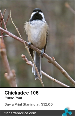 Chickadee 106 by Patsy Pratt - Photograph - Digital Photography