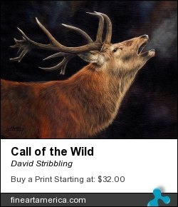 Call Of The Wild by David Stribbling - Painting - Oil On Canvas