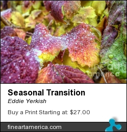 Seasonal Transition by Eddie Yerkish - Photograph - Hdr Photograph
