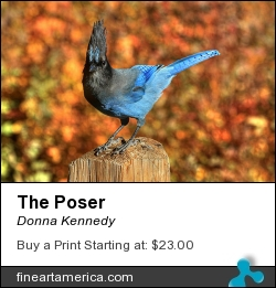 The Poser by Donna Kennedy - Photograph - Photograph