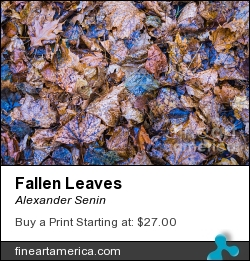 Fallen Leaves by Alexander Senin - Photograph