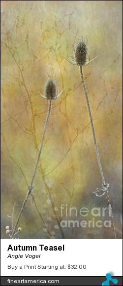 Autumn Teasel by Angie Vogel - Photograph - Photography / Digital Art
