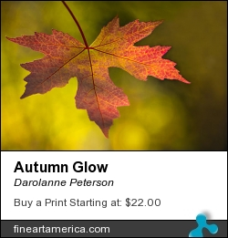 Autumn Glow by Darolanne Peterson - Photograph - Photography