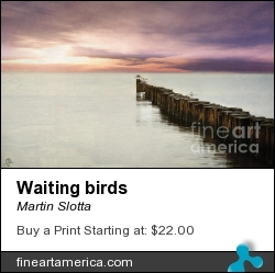 Waiting Birds by Martin Slotta - Photograph