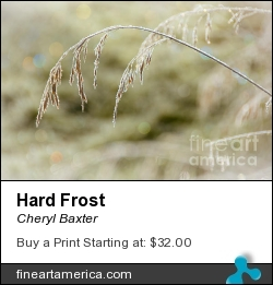 Hard Frost by Cheryl Baxter - Photograph - Photography