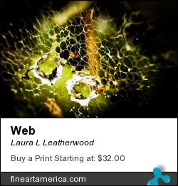 Web by Laura L Leatherwood - Photograph - Photography