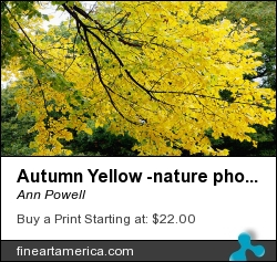 Autumn Yellow -nature Photography by Ann Powell - Photograph - Photography