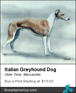 Italian Greyhound Dog by Olde Time  Mercantile - Drawing - Pencil