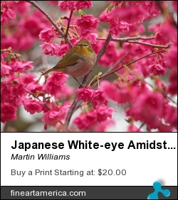 Japanese White-eye Amidst Blossoms by Martin Williams - Photograph - Photo