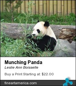 Munching Panda by Leslie Ann Boisselle - Photograph - Photography