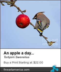 An Apple A Day... by Torbjorn Swenelius - Photograph - Photography