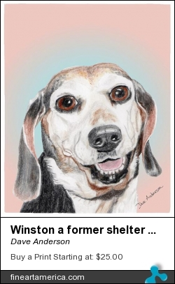 Winston A Former Shelter Sweetie by Dave Anderson - Mixed Media