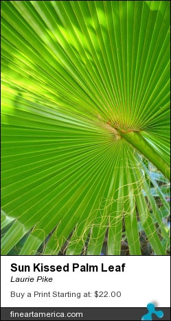 Sun Kissed Palm Leaf by Laurie Pike - Photograph - Photography
