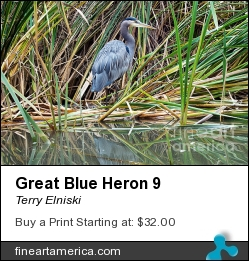 Great Blue Heron 9 by Terry Elniski - Photograph - Photography