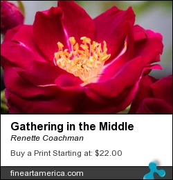 Gathering In The Middle by Renette Coachman - Photograph - Digital Photograph