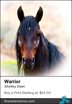 Warrior by Shelley Ewer - Photograph - Photography