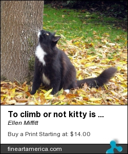 To Climb Or Not Kitty Is Indecisive by Ellen Miffitt - Photograph - Photograph