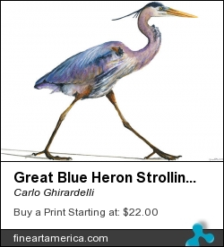 Great Blue Heron Strolling by Carlo Ghirardelli - Painting - Watercolor