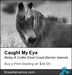 Caught My Eye by Betsy A Cutler East Coast Barrier Islands - Photograph - Fine Art Photography
