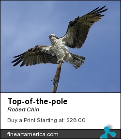 Top-of-the-pole by Robert Chin - Photograph - Photographs