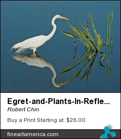 Egret-and-plants-in-reflection by Robert Chin - Photograph - Photographs