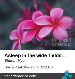 Asleep In The Wide Fields Of Destiny by Sharon Mau - Photograph - Photography - Fine Art