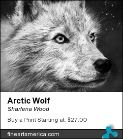 Arctic Wolf by Sharlena Wood - Drawing - Charcoal On Paper