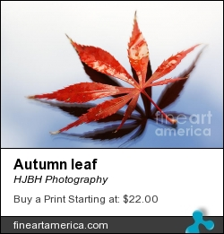 Autumn Leaf by HJBH Photography - Photograph - Photographs - Photography, Photographs
