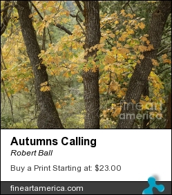 Autumns Calling by Robert Ball - Photograph - Photography