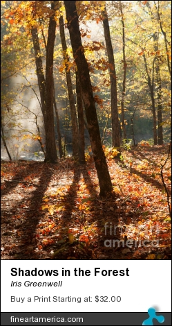 Shadows In The Forest by Iris Greenwell - Photograph - Photography