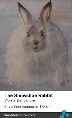 The Snowshoe Rabbit by Violeta  Damjanovic - Painting - Watercolor