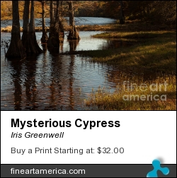 Mysterious Cypress by Iris Greenwell - Photograph - Photography