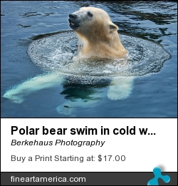 Polar Bear Swim In Cold Water by Berkehaus Photography - Photograph - Photograph