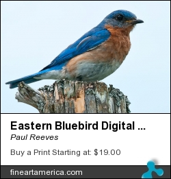 Eastern Bluebird Digital Watercolour 7435 by Paul Reeves - Digital Art - Photograph With A Watercolour Filter Applied.