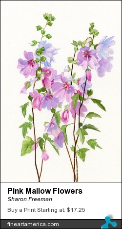 Pink Mallow Flowers by Sharon Freeman - Painting - Watercolor On Paper