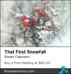 That First Snowfall by Susan Capuano - Photograph - Photography/digital Artwork