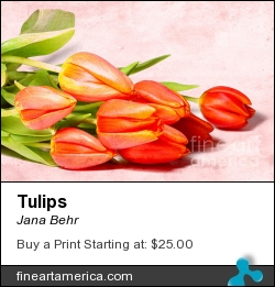 Tulips by Jana Behr - Photograph - Photo