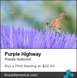 Purple Highway by Fraida Gutovich - Photograph - Photography W/texture