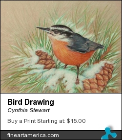 Bird Drawing by Cynthia Stewart - Drawing - Colored Pencil