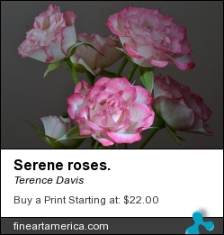 Serene Roses. by Terence Davis - Photograph - Photography