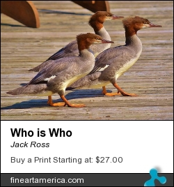 Who Is Who by Jack Ross - Photograph